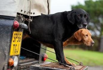 Twee honden die klaar zijn voor lopen