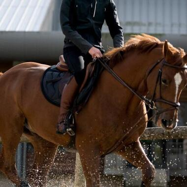 Das temperamentvolle Pferd: im Umgang und beim Reiten (duplicate)