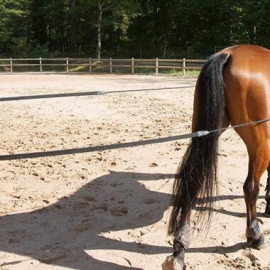 Wie longiert man sein Pferd?