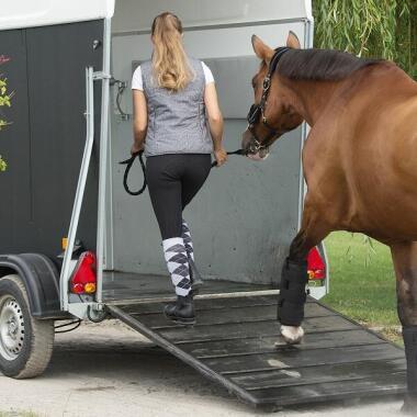 Tipps fürs Verladetraining mit deinem Pferd