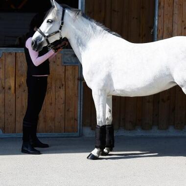 Die richtige Wahl des Beinschutzes für Pferde: Bandagen, Streichkappen, Gamaschen und Glocken.