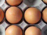 aliments riches en proteines