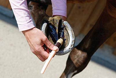 comment_choisir_soins_sabot_cheval_ap2.jpg