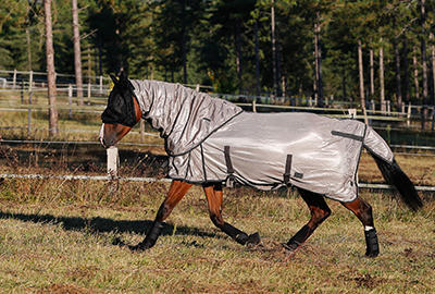 comment_choisir_chemise_cheval.ap2_.jpg