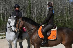 how to choose your saddle pad