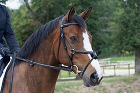 Come scegliere la testiera per il cavallo