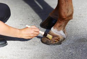 verzorgingsproducten voor paardenhoeven