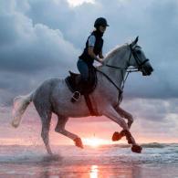 pourquoi_l_equitation