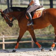 anatomie_du_cheval
