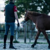 pourquoi_travailler_son_cheval_a_la_longue