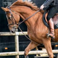 les_differentes_robes_des_chevaux