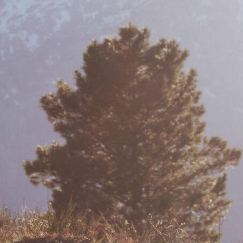 et_si_vous_osiez_le_trail