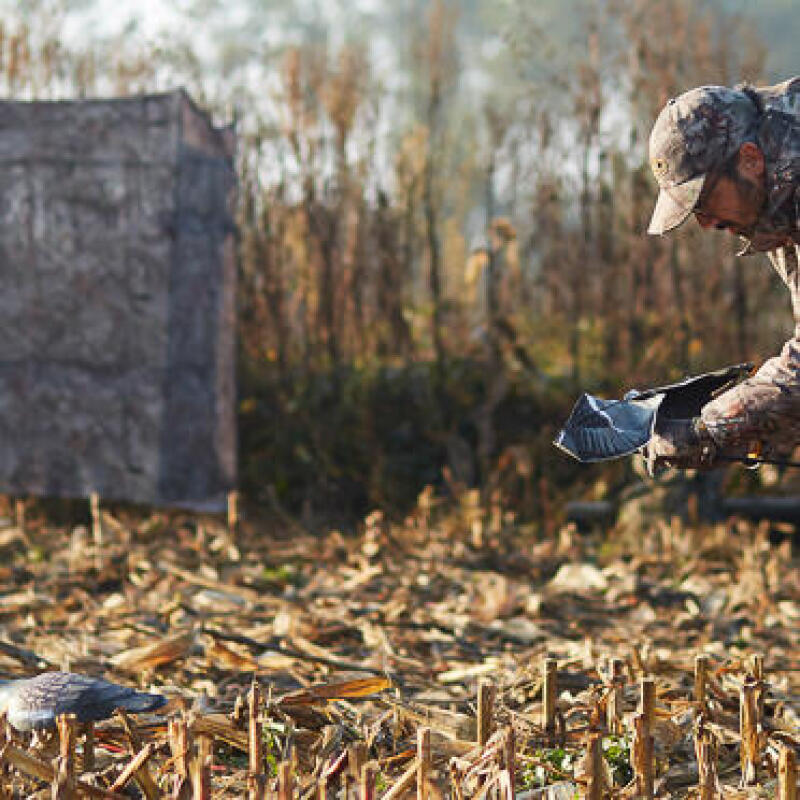 6 tips for pigeon hunting