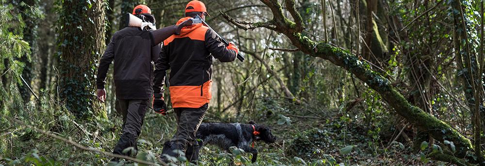 Des bécassiers dans un bois avec un chien