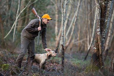 Chien de chasse pour la bécasse
