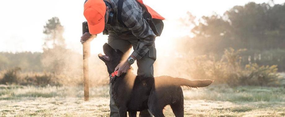 choisir son chien de chasse