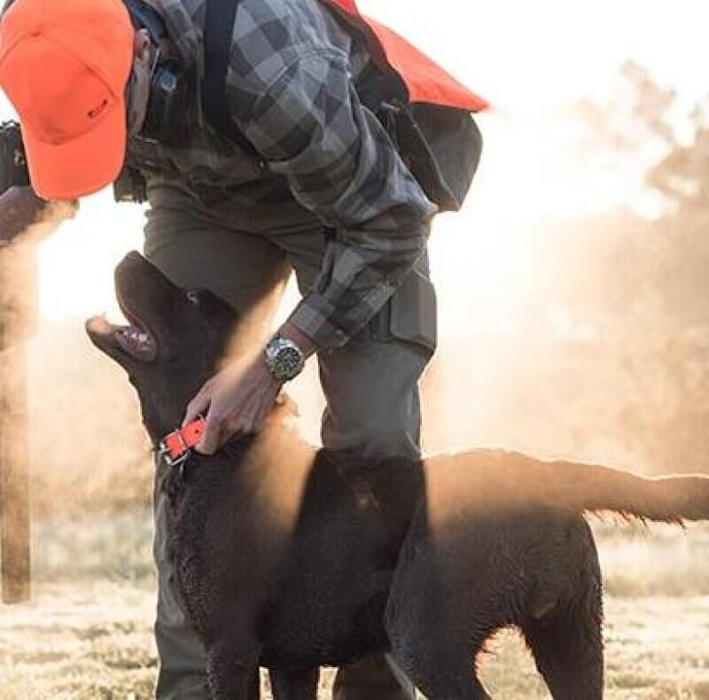 Which breed of dog for which type of hunting?