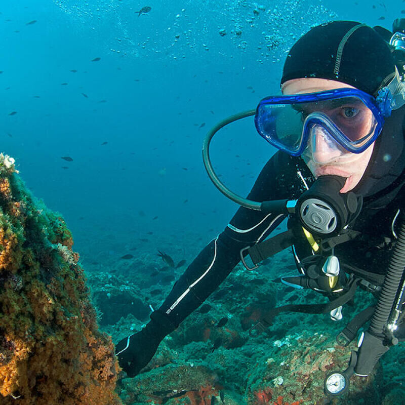 conseil découvrir faune flore méditerranée longitude 181 subea