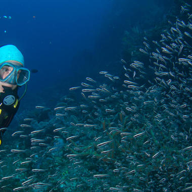 conseil choisir lestage plongée subea house reef alor indonésie
