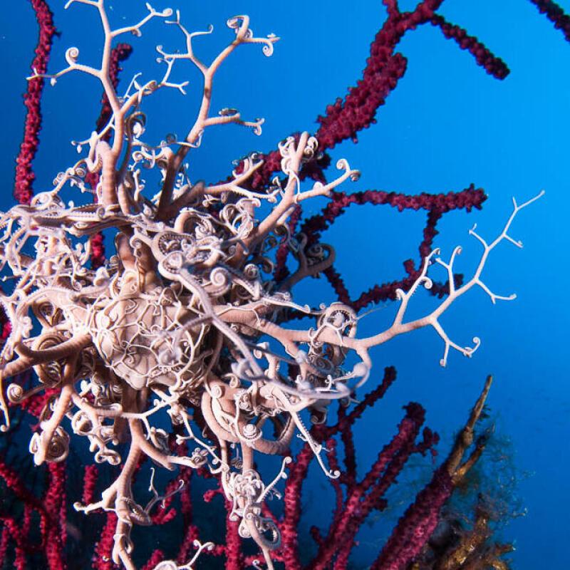 conseil du snorkeling vers la plongée sous marine subea pain de sucre