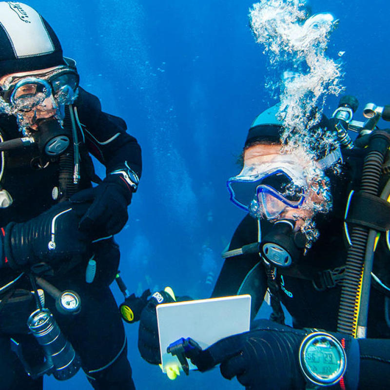 tips for diving in pairs security subea