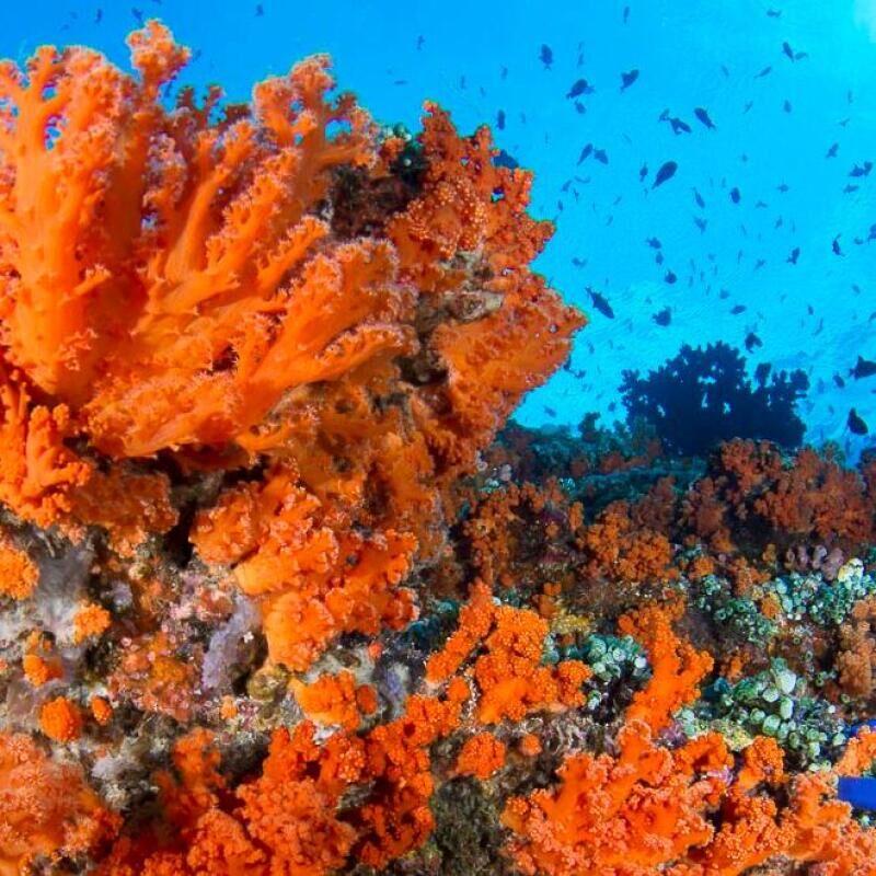 10 tips starting improving underwater photography olivier subea banda