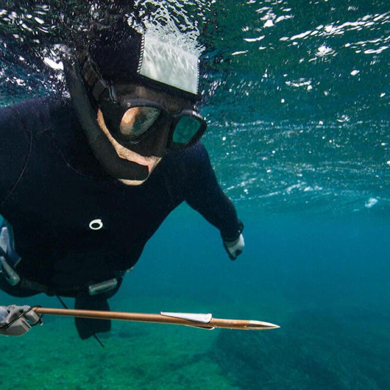 mailles légales biologiques méditerranée atlantique manche mer du nord chasse sous-marine subea