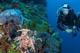 10 raisons de débuter la plongée sous-marine subea alor indonésie
