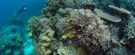 conseil lexique plongée sous marine subea chapel point