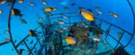 découvrir la plongée sur épave subea kalipayan wreck