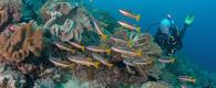 conseil plongée sous-marine diabète indonésie alor house reef