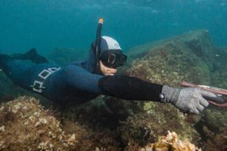 conseil réglementation et sécurité chasse sous-marine subea