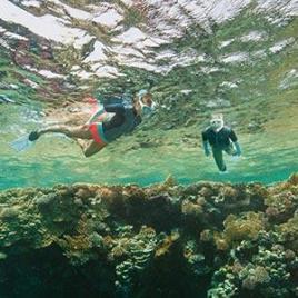 conseils snorkeling randonnée palmée subea