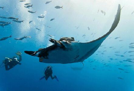 Les conseils de sécurité pour la plongée et le snorkeling