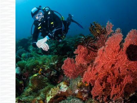 La sécurité en plongée sous-marine