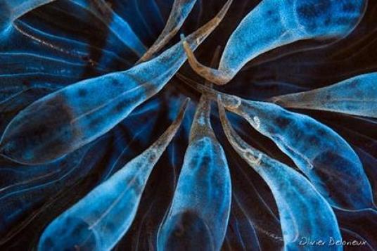 10 astuces débuter évoluer photographie sous marine olivier subea molino