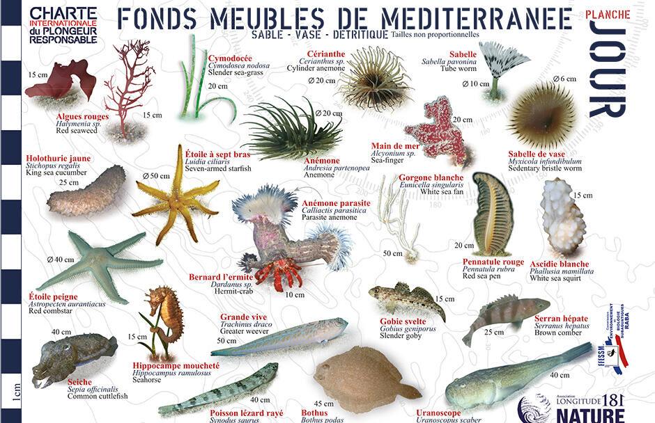 conseil découvrir faune flore méditerranée longitude 181 fonds meubles jour subea