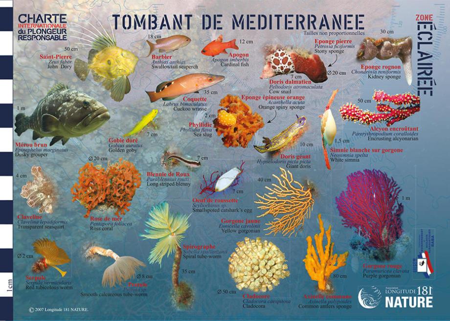 conseil découvrir faune flore méditerranée longitude 181 tombant éclairé subea