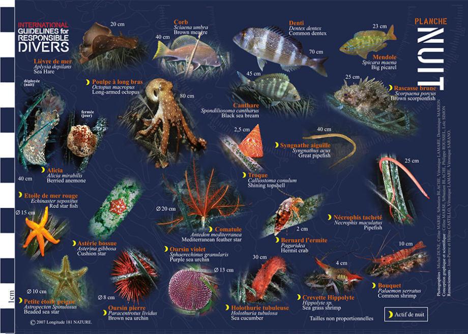 conseil découvrir faune flore méditerranée longitude 181 herbier posidonie nuit subea