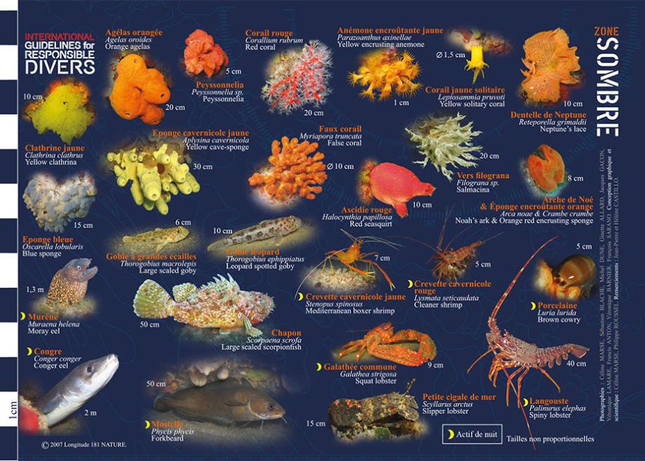 conseil découvrir faune flore méditerranée longitude 181 tombant sombre subea