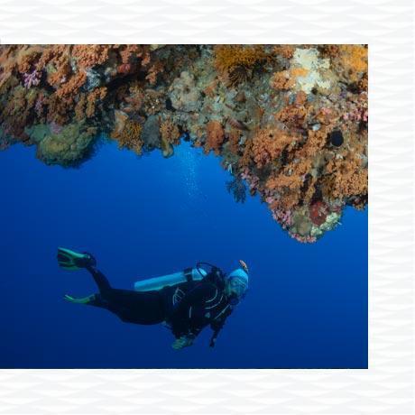 10 raisons de débuter la plongée sous marine subea red sand alor indonésie