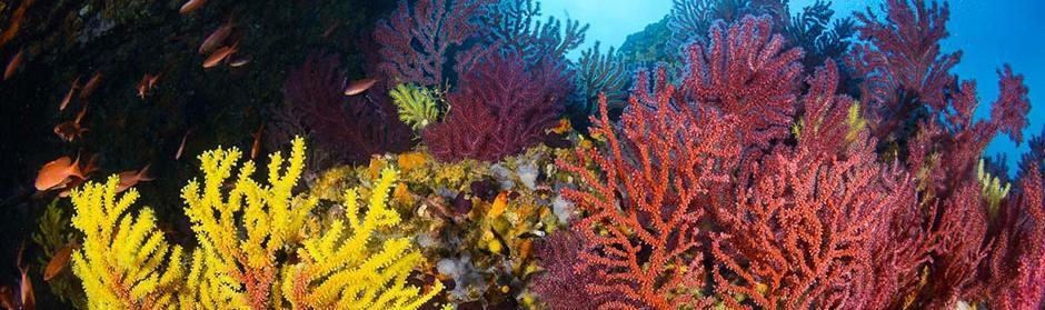 10 raisons de débuter la plongée sous-marine subea carall bernat