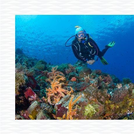 conseil charte internationale plongeur responsable longitude 181 partenaire subea indonésie alor red sand
