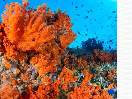 conseil charte internationale plongeur responsable longitude 181 partenaire subea  banda