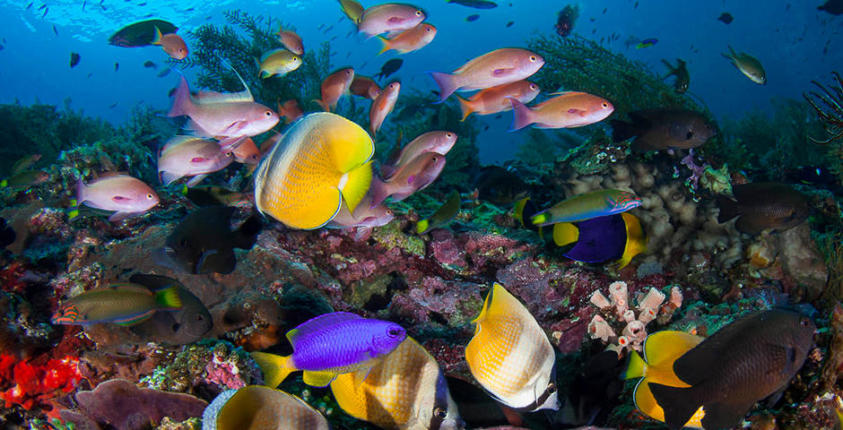 conseil charte plongeur responsable longitude 181 partenaire subea bama wall