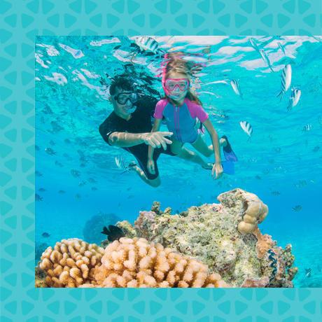 conseil snorkeling charte internationale randonneur palmé responsable longitude 181 partenaire subea