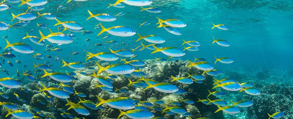 conseil snorkeling charte internationale randonneur palmé responsable longitude 181 partenaire subea white tip avenue