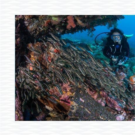 conseil réussir voyage plongée sous marine subea alor indonésie