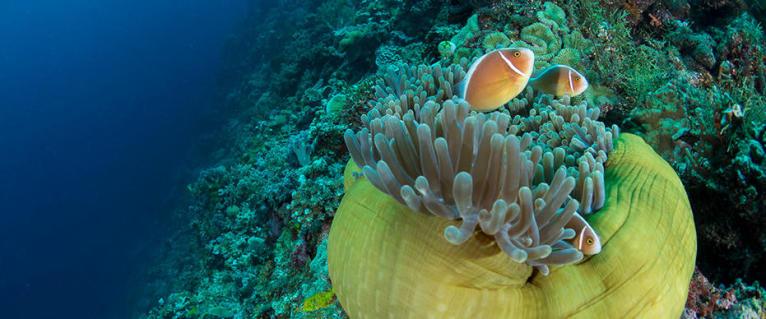 conseils réussir voyage plongée sous marine subea current view