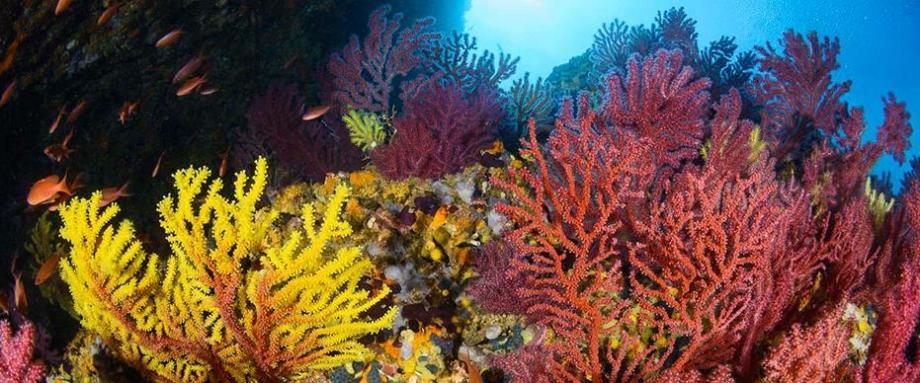 conseil réussir voyage plongée sous marine subea carall bernat